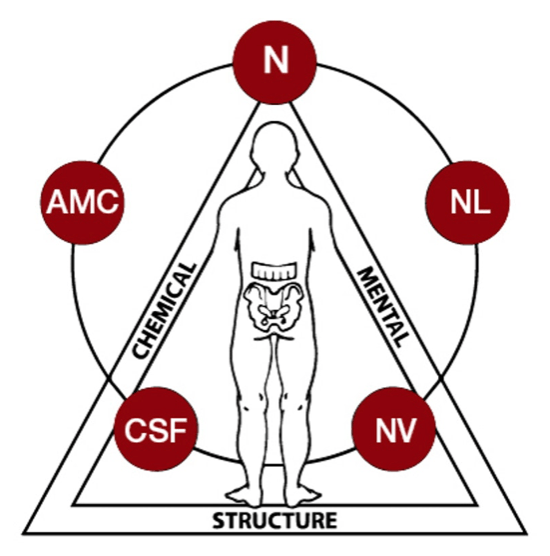 Graphic of Applied Kinesiology - Structural, Chemical Mental triad
